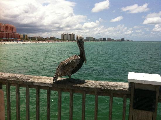 Could hear the sizzle as the water put the sun out for Clearwater fishing pier