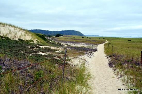 Crane Beach On A Dune Trail