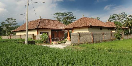 Bon Nyuh Bungalows compound surrounded by rice paddies