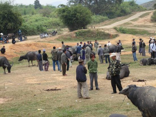 Water Buffalo Market: Local people at the Market