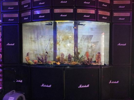 Fish tank picture of kiss monster mini golf las vegas for Fish tank las vegas