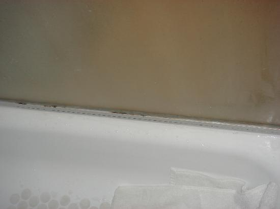 Premier Inn York North Hotel: spot of bleach would cure this mould problem