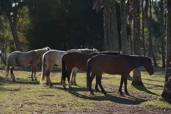 Hacienda Pinsaqui: mares on property