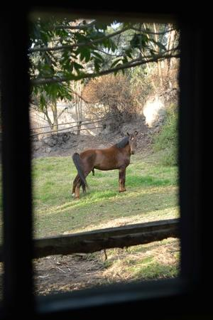 Hacienda Pinsaqui: horse corral outsidethe window of room 27 & 28