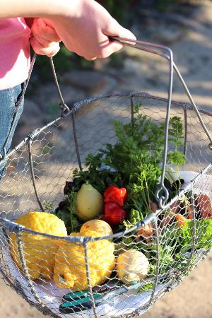 Babylonstoren: pickings from the garden