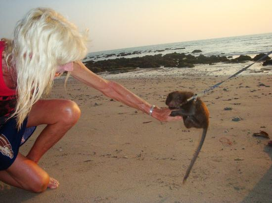 Klong Khong Beach Resort: monkey on the beach, Lantas Lodge