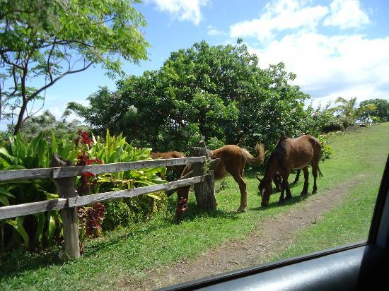 Cabanas Manatea: entrada