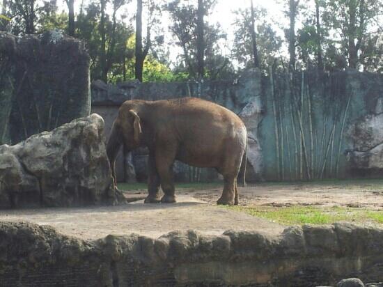 La Aurora Zoo: elefantes