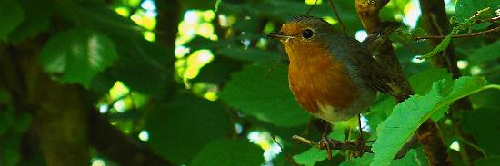 Arthur The Blue Badge Guide: This robin was very happy to pose for a photo