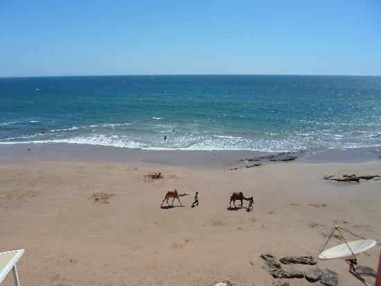 Taghazout Beach : Camels at Hash Bay