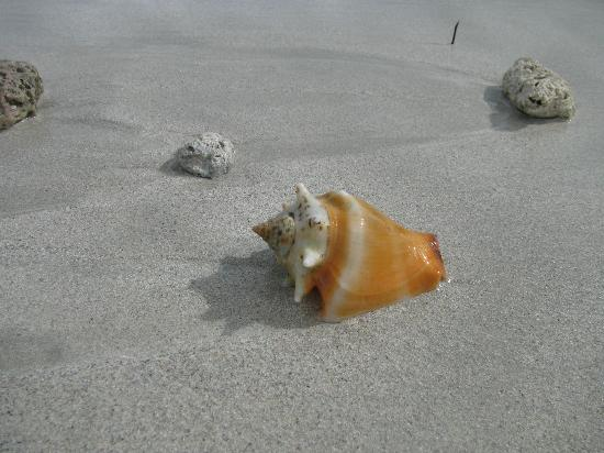 Paradisus Varadero Resort & Spa: Early in the morning, it's fun to see what washes up on the beach