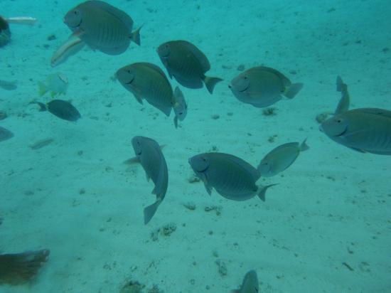 Sol Caribe Sea Flower Hotel: nadando con peces