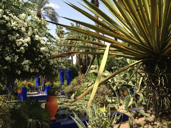 Majorelle garden picture of jardin majorelle marrakech for Jardin 87