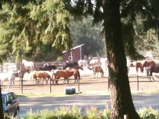 Western Pleasure Guest Ranch : Driving the horses up to the corral and barn in the morning