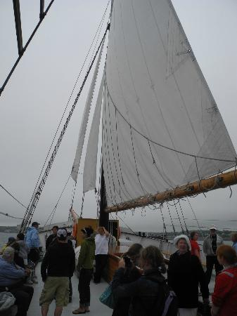 Tall Ship Silva Inc: Sails up in spite of low winds.