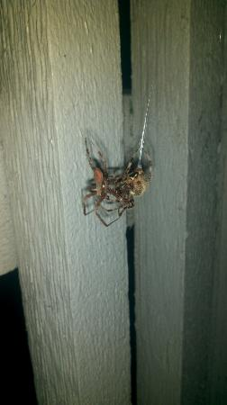 Residence Inn Winston-Salem University Area: Spiders are the only ones comfortable here. Two are fighting on my patio