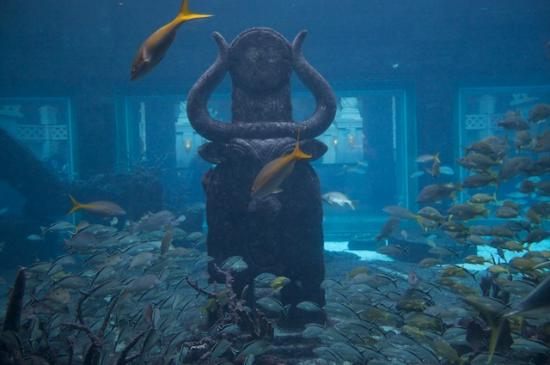 Atlantis - Harborside Resort: The Aquarium