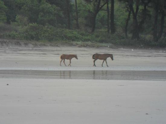 Kashid Beach : Rainy Seasons, No Tourists, Horses too are Relaxing