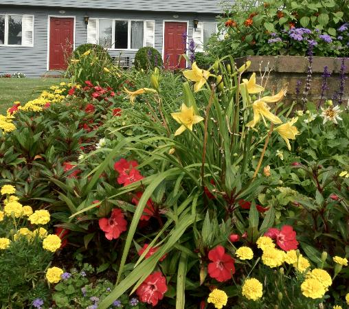 Red Horse Inn - Falmouth: Front Lawn  flowers