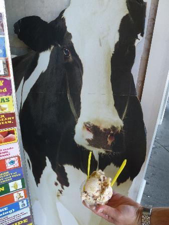 The Ice Cream Store: Cow decoration w/ MY ice cream at Ice Cream Store