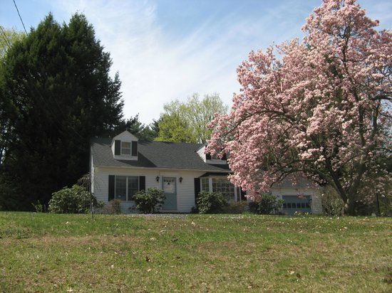Birdsong Bed & Breakfast of Amherst: Birdsong Bed and Breakfast with our magnolia tree in full bloom