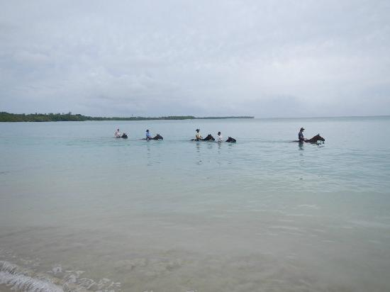 Being with Horses: riding the horses in Buccoo Bay, Tobago