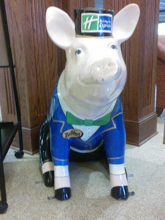 Holiday Inn Express & Suites Lexington NW-The Vineyard : Higgins the Bellhog -in the HIE lobby