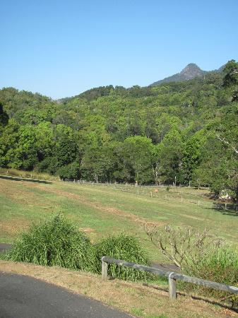 A View of Mt Warning Bed and Breakfast: Grounds