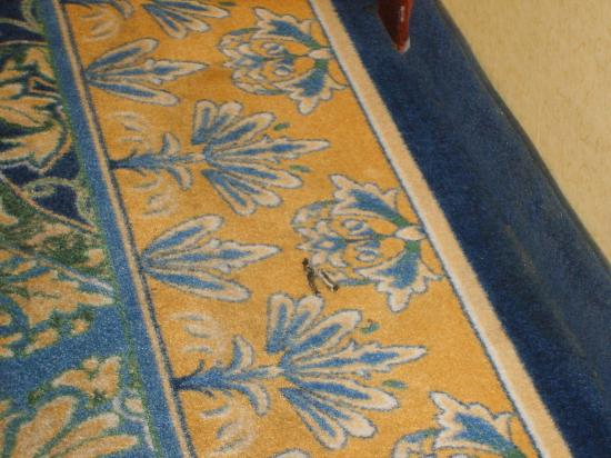 Harrah's Laughlin: peice of carpet that stayed there for 4 days