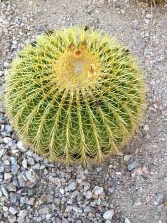Hampton Inn and Suites Tucson-Mall: cacti on property very pretty!