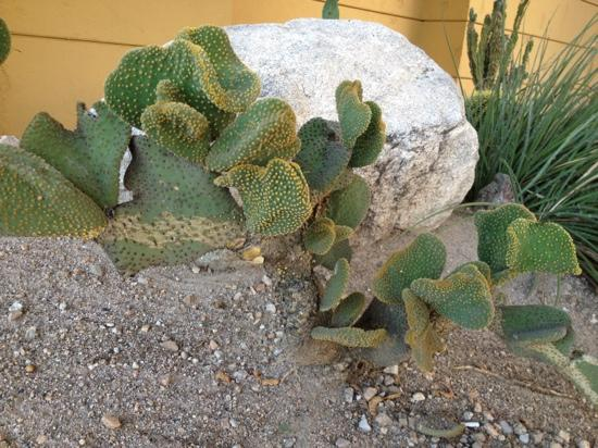 Hampton Inn and Suites Tucson-Mall: Very nice landscaping at hotel!