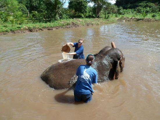 Magical Elephant Training: bath