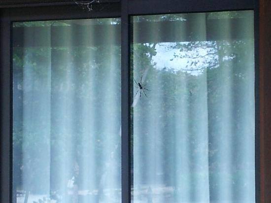 كوستانس إيفيليا: Massive spider outside our room!