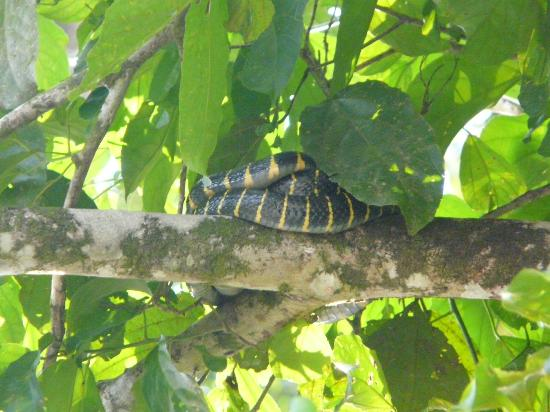 Discovery Tours Day Tours: Mangrove Snake