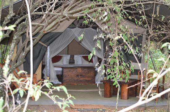 Mara Bush Camp: Luxury in the Bush