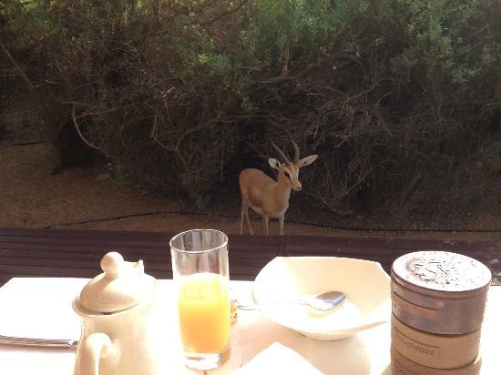 Al Maha, A Luxury Collection Desert Resort & Spa: breakfast's guest ...
