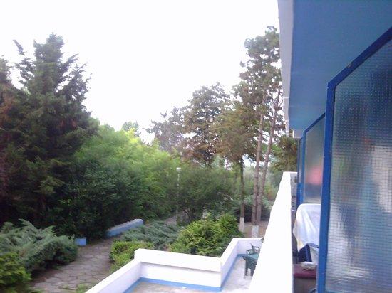 Кап-Аврора, Румыния: Реальный вид на море с балкона через деревья + 100м