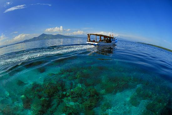 Siladen Resort & Spa: Great corals