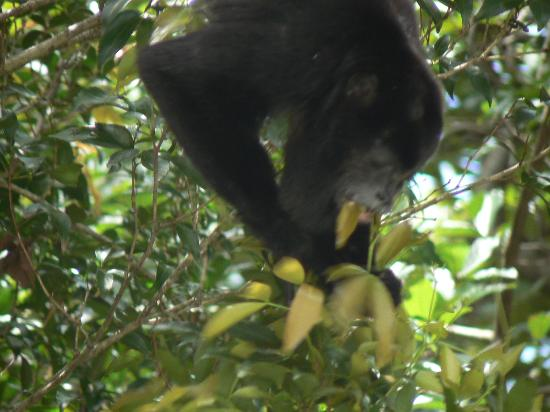 Costa Rica Best Trips: monkey lunch