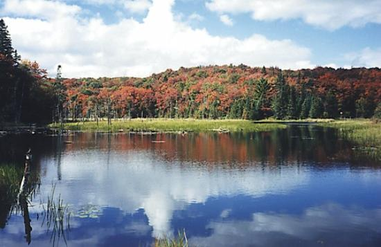 Glenview Cottages: Glenview Pond on hiking trail