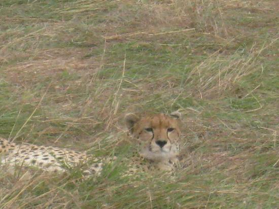 Entim Camp: Sammy persisted and found this mama cheetah!