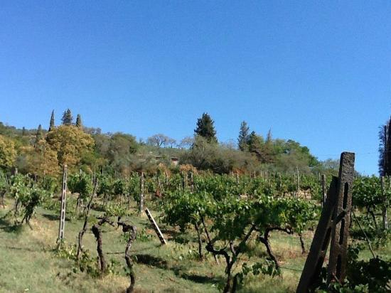 Agriturismo La Striscia: view