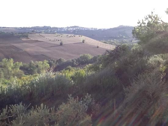 Agriturismo Pomod'oro: Вид из окна