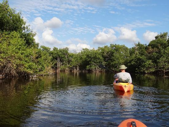 Tour The Glades - Private Wildlife Tours: The long roots of the mangroves
