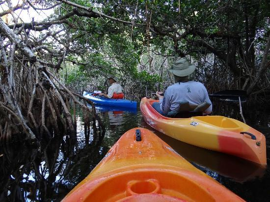 Tour the Glades - Private Wildlife Tours: Winding our way through the mangroves