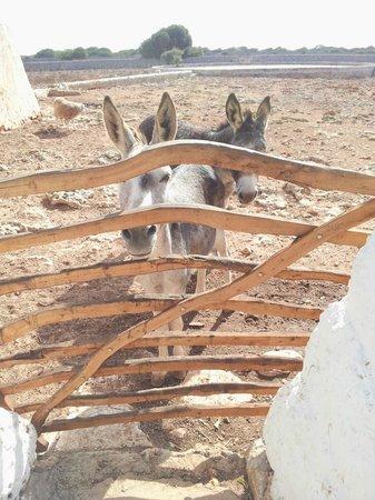 Matchani Gran: La masía tiene un par de burros y ovejas