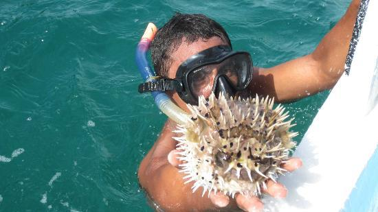 Papagayo Green Bay Day Tours: Andres showing a puffer fish
