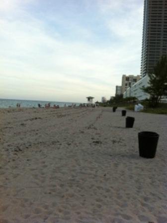 DoubleTree Resort by Hilton Hollywood Beach : Praia