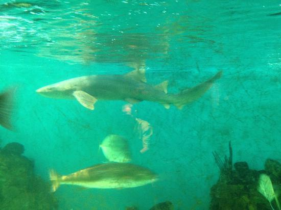 Winter Picture Of Clearwater Marine Aquarium Clearwater