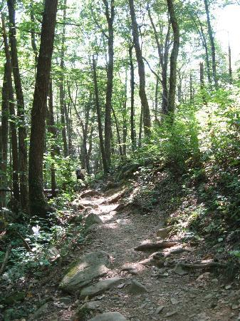Big Meadows Campground: Trail